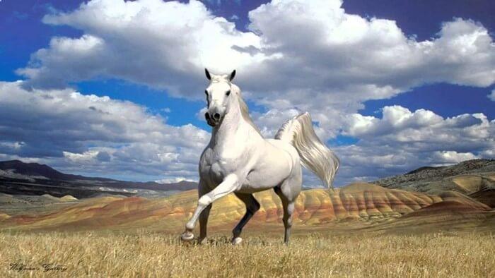 Tuổi trẻ: Bạn chọn là ngựa thường hay trở thành Thiên Lý Mã?