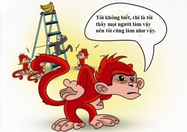 Những chú khỉ mới hành động như một thói quen của bản thân